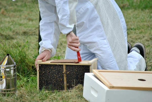 Buckfast Paketbienen standbegattet