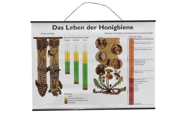 Lehrtafel Das Leben der Honigbiene