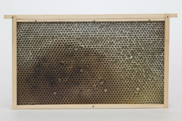 Virtuelles Bienenvolk Normalmaß