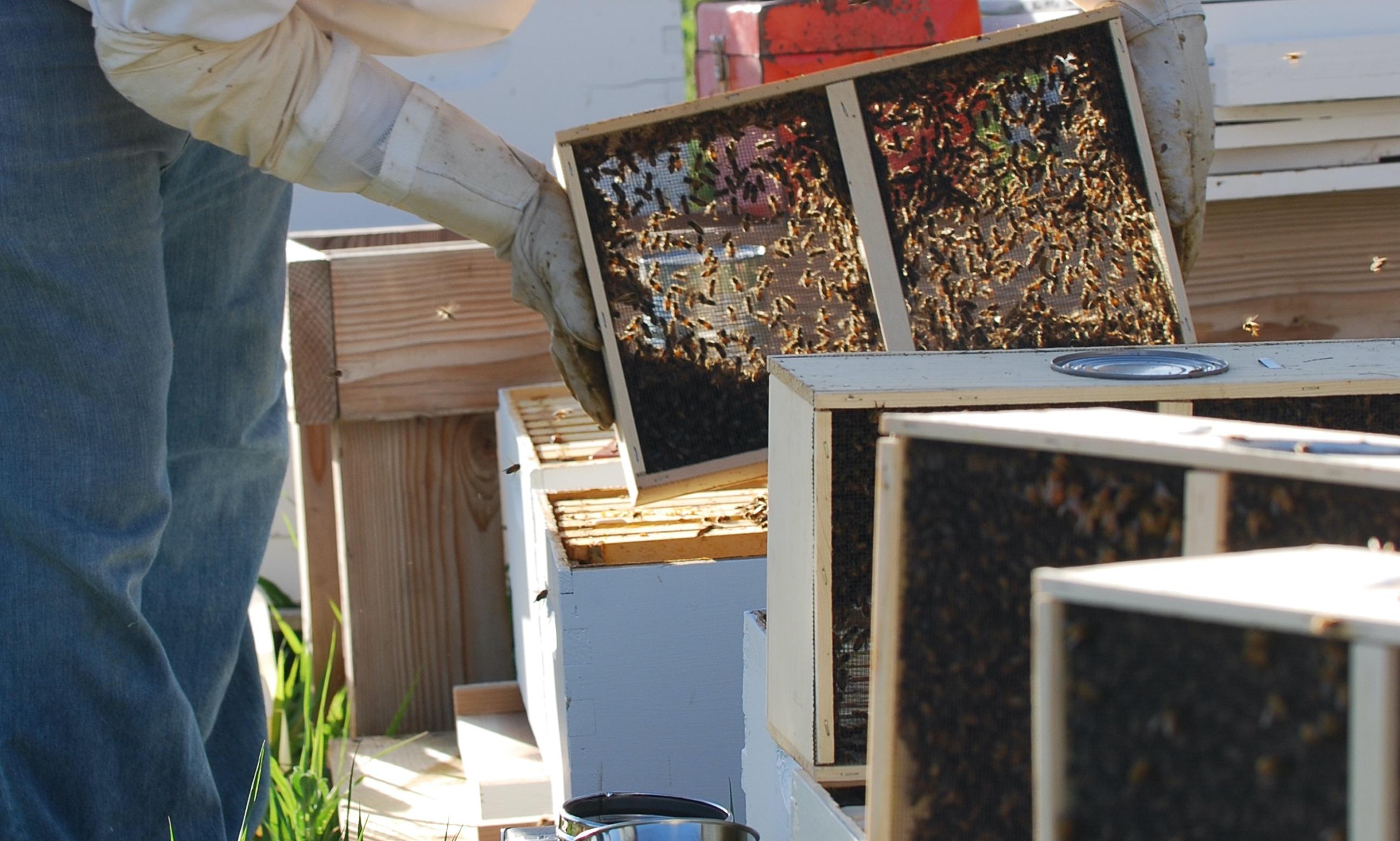 Bienen zu Staffelpreisen: Jetzt bestellen und sparen!