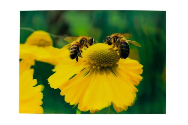 """3D Zauberbild """"Bienen auf gelber Blüte"""""""