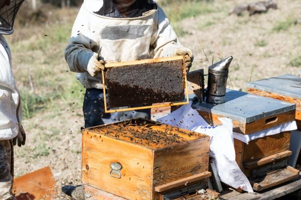 Dark European Bee Beepackage - Black Bee