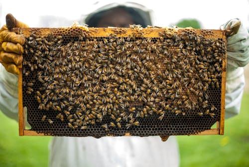 Wabe-mit-Bienen
